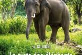 La piste des elephants-1