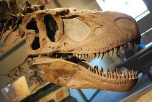 Daspletosaurus était un redoutable prédateur qui s'attaquait principalement aux dinosaures herbivores.