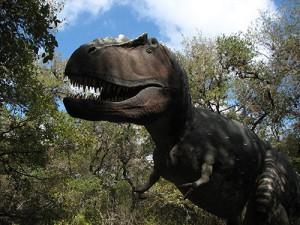 Les daspletosaures formaient vraisemblablement pour chasser une meute ou un groupe tribal, où chacun avait sa fonction.